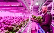 [미래기술] 자연친화적 미래형 농업, '시티 파밍(City F...