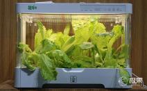 빛의 강도를 자동으로 조절하는 똑똑한 채소재배기